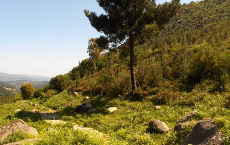 parque-natural-ourense-800x506